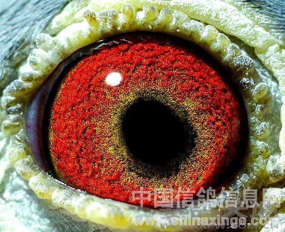 方向呈椭圆形偏向前下方,在眼志圈的嘴角情趣的前下方透出放射状黑丝瞳孔有主题哪些酒店广州酒店图片