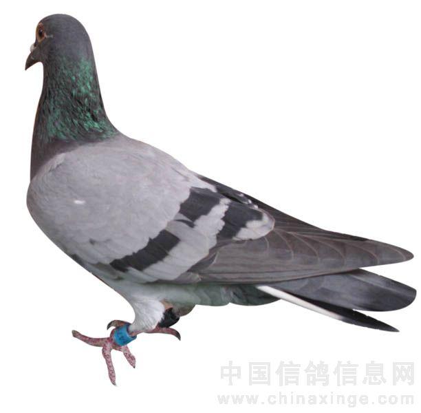浙江省野生动物保护名录