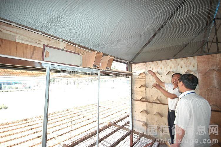 鸽子棚内部设计图片展示