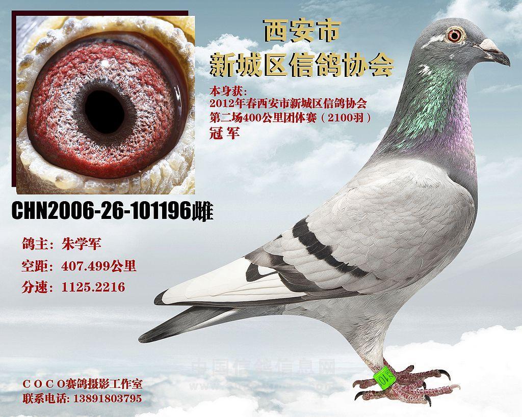 西安鸽协2012年三场春赛冠军欣赏(图)-信鸽园地-中国