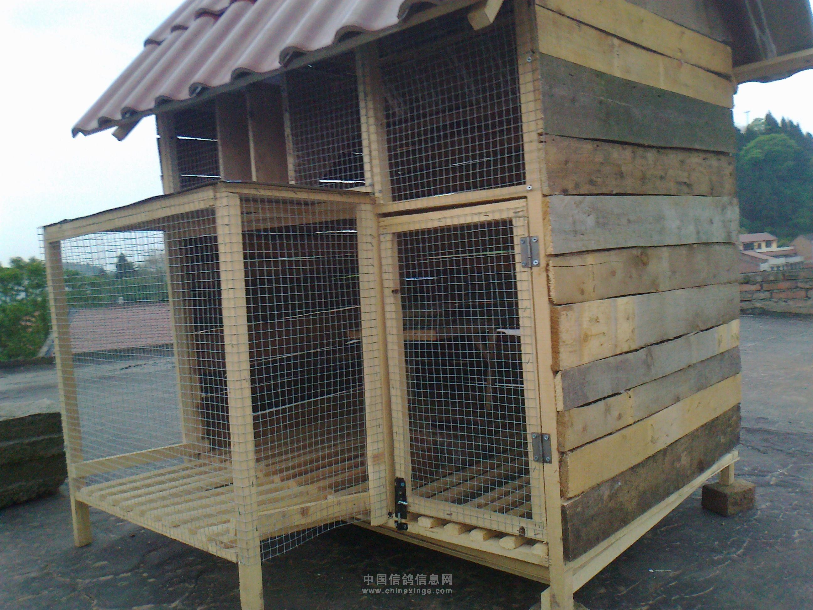 农村赛鸽棚设计大全图