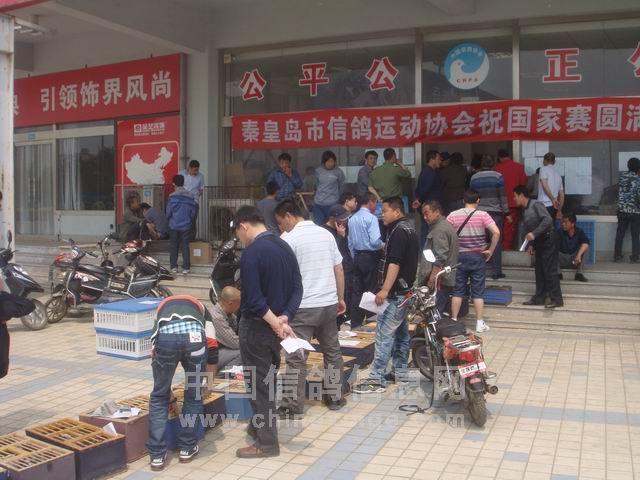 秦皇岛市信鸽运动协会780公里郑州国家赛于5月10日十点到十一点