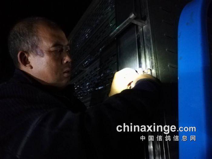 凌海280公里比赛封笼图片 - 河北唐山滦县信鸽协会