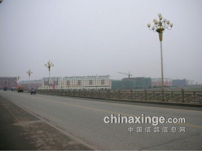 河南省南阳市唐河县信鸽协会      图片说明