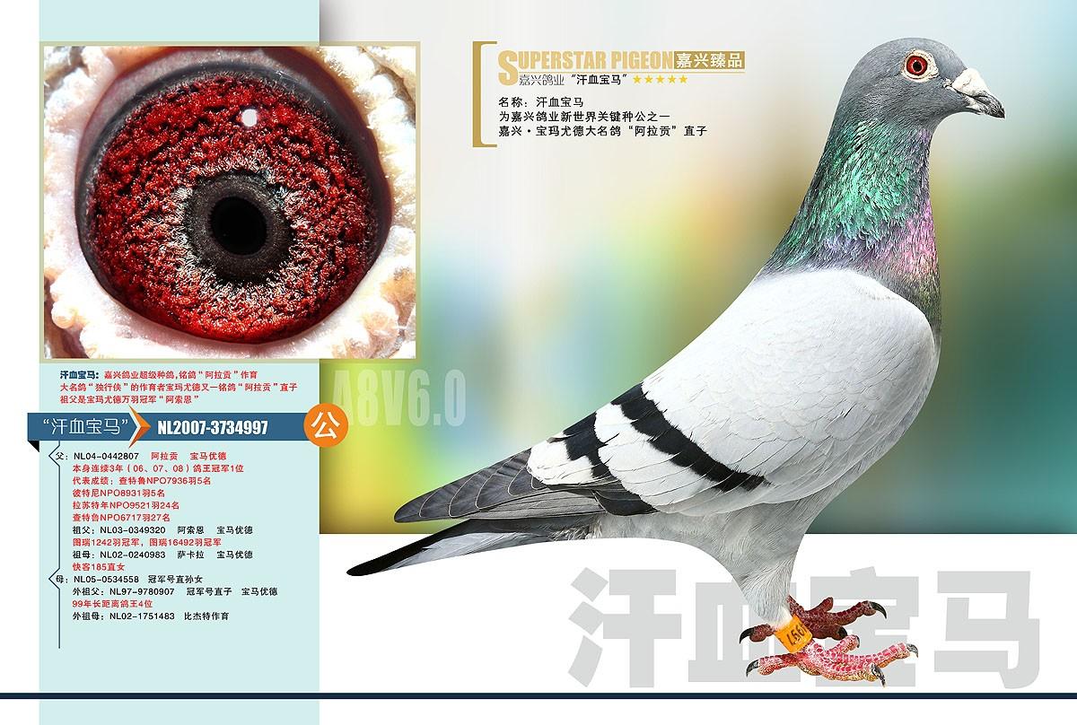 三营信鸽协会_重庆市万州区信鸽协会
