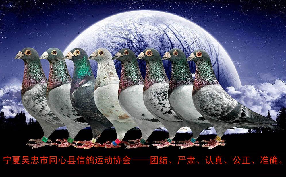 三营信鸽协会__相册_河南安阳铁路信鸽协会