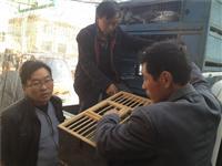 青海省海东市乐都区信鸽协会